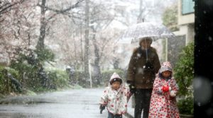 """""""หิมะหลงฤดู"""" โปรยปรายทั่วโตเกียว"""